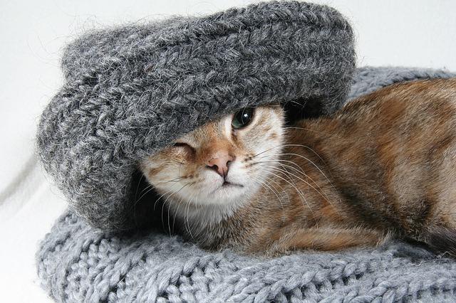 kočka se šálou