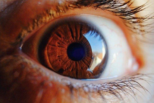 Detail na ľudské hnedé oko s dlhými mihalnicami
